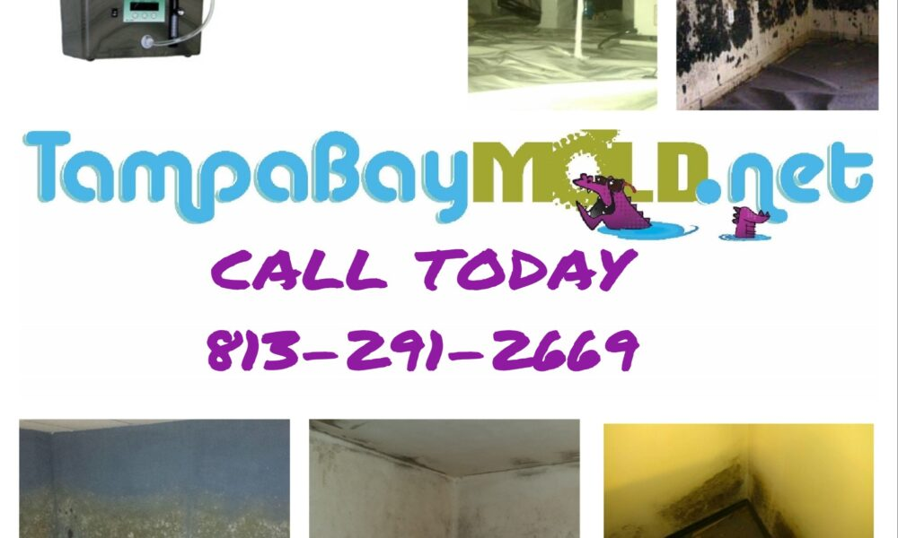 Mold Remediation Tampa